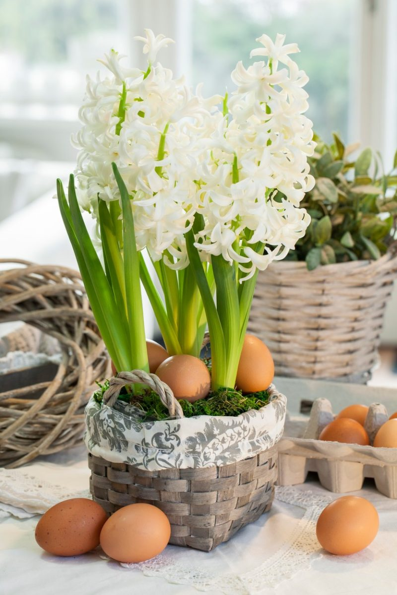easter hyacinth basket